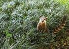 cat-lei-activity-animals01_2580x2580