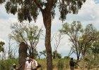 saf-krl-lei-activity-walking-safari01_2580x2580