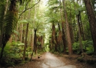 04_Redwood-forest.jpg