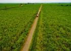 20_Tren-Crucero-at-sugar-cane-plantations.jpg