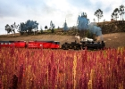 7_Steam-locomotive-and-quinoa-fields-near-Riobamba.jpg