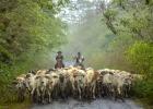 10_Cattle-crossing-near-Bucay.jpg