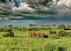 5_Serengeti_FS.jpg