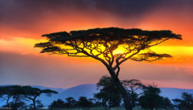 serengeti-pictures-34-hd-images-wallpapers